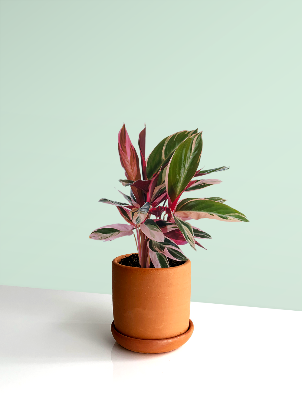 Sale home plantas para la casa