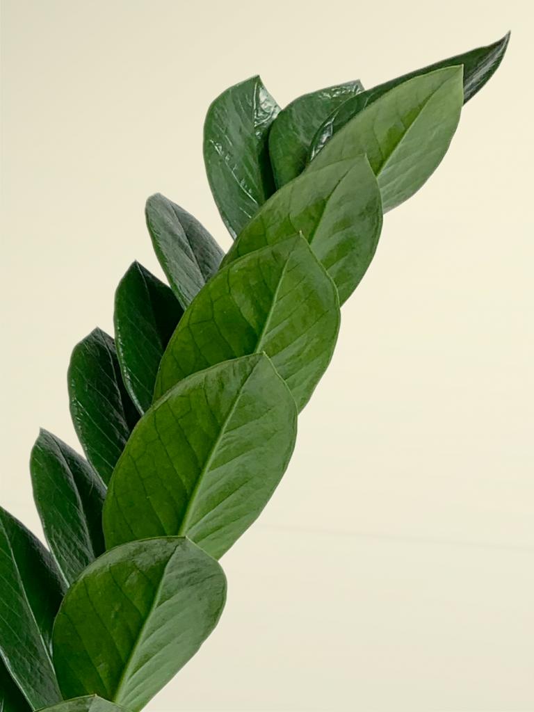 Plantas de poca luz home plantas para la casa