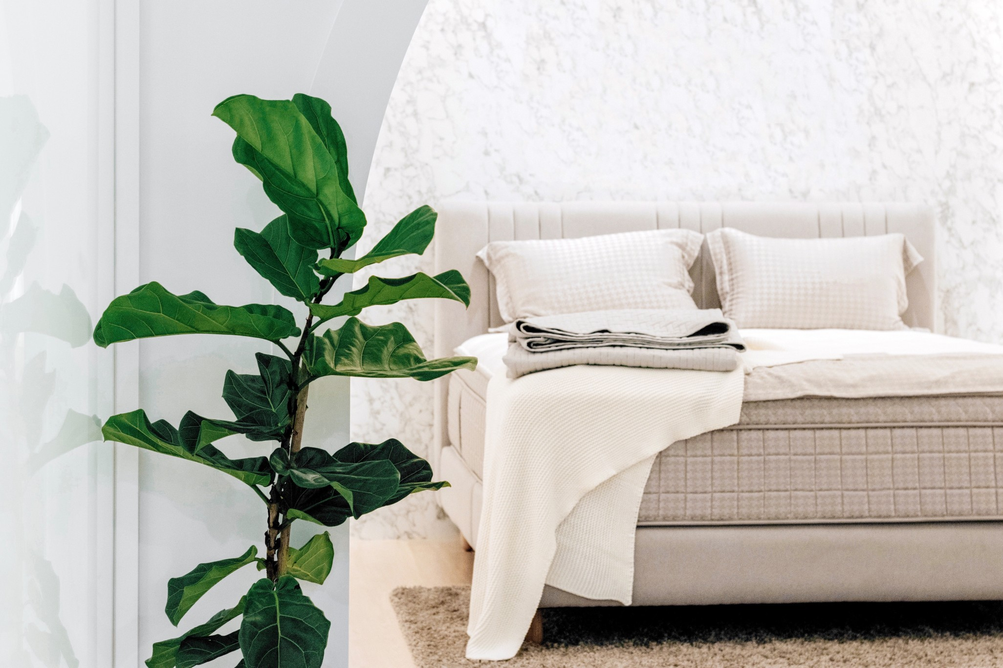 fiddle-leaf-fig-plant-decoration-in-the-bedroom_t20_8lYLKz