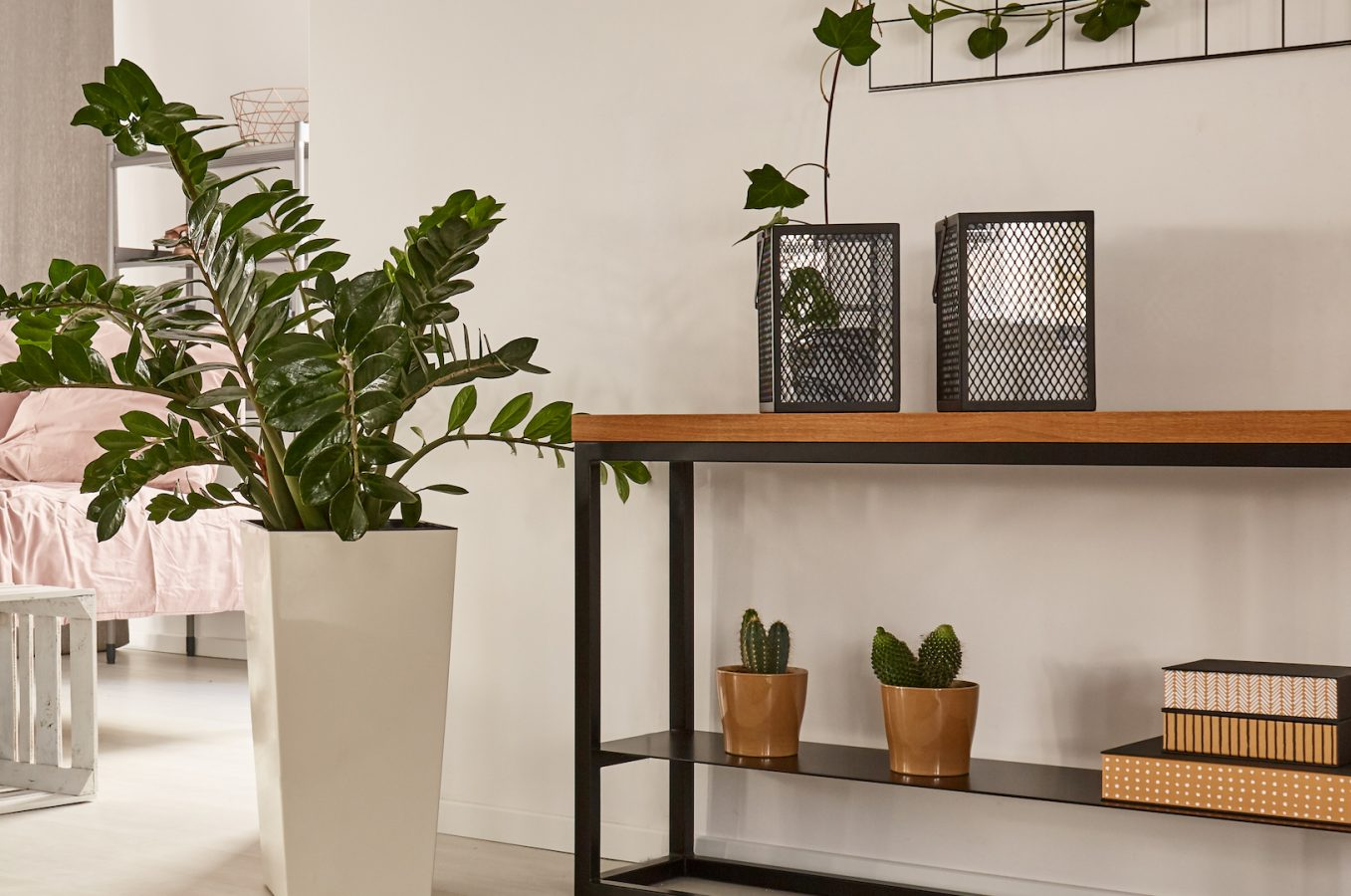 Cozy studio apartment with big bed, wooden furniture and big plant