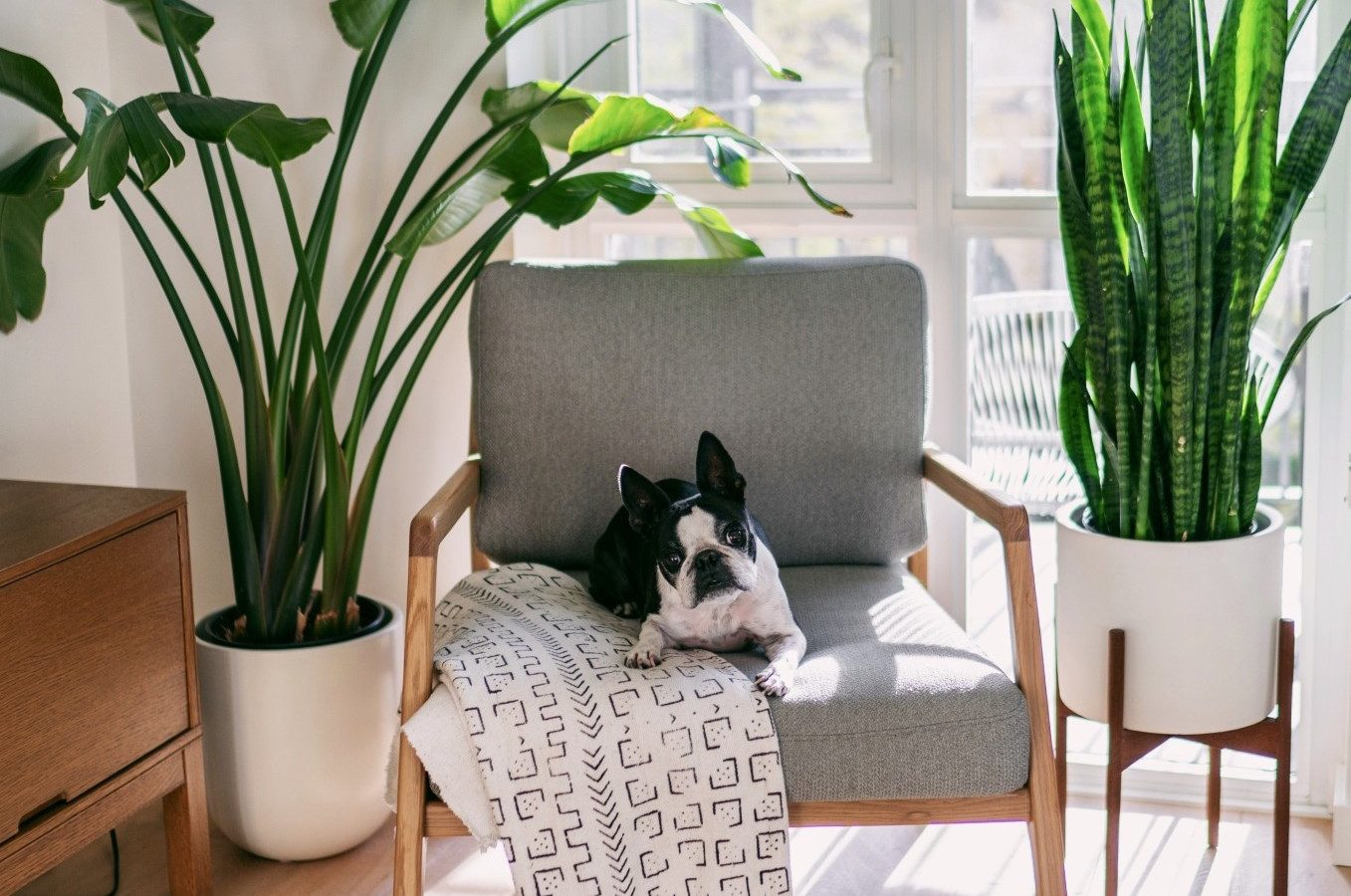 dog-sitting-on-accent-chair_t20_OzjBXL